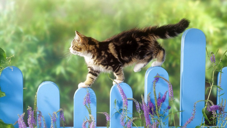 1823506-cats,animals,picket fence.jpg