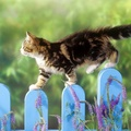 1823506-cats,animals,picket fence
