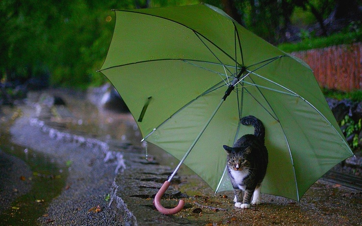 1824688-cats,umbrellas.jpg