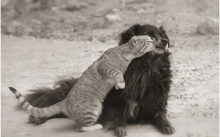1830451-cats,animals,dogs,friends.jpg