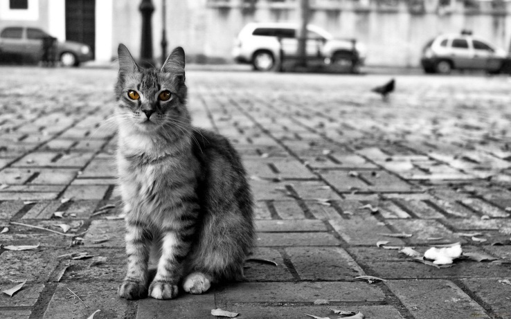 1831718-black and white,streets,cats,animals.jpg