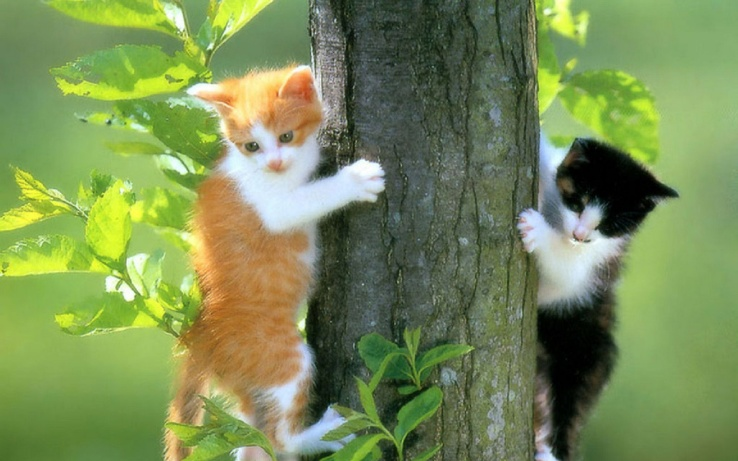 1843611-trees,cats,animals.jpg
