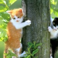 1843611-trees,cats,animals
