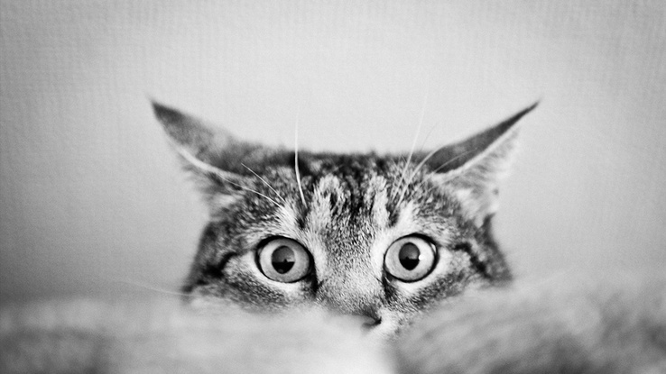 1853348-black and white,eyes,cats,animals,cat eyes.jpg