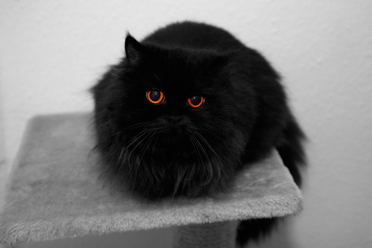1865533-fur,amber eyes,eyes,black,cats,animals,Black Cat.jpg