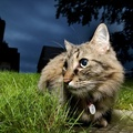 1866168-night,cats,animals,grass,pets