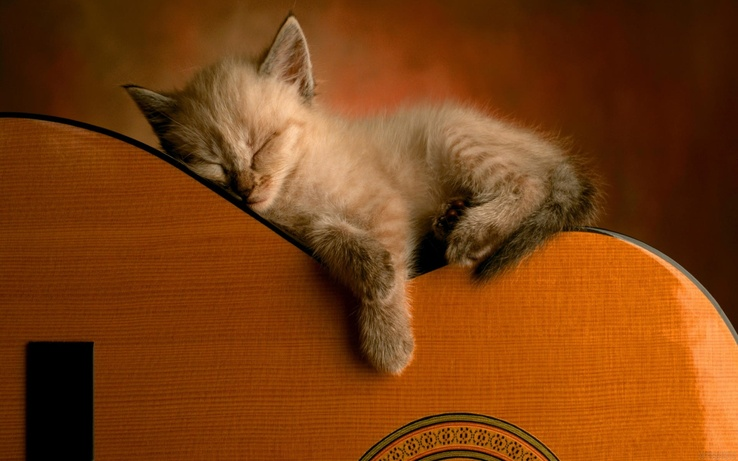 1867815-kittens,cats,animals,guitars.jpg