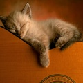 1867815-kittens,cats,animals,guitars