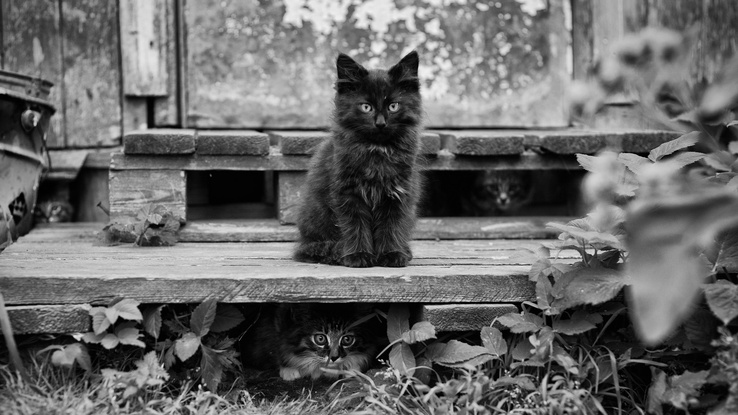 1900792-nature,cats,animals,grayscale,kittens.jpg