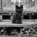 1900792-nature,cats,animals,grayscale,kittens