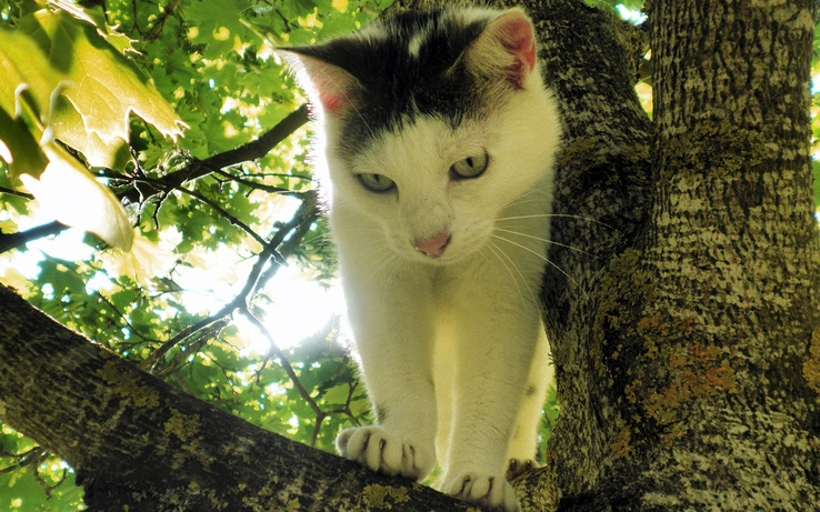 1915895-kittens,trees,cats,animals,feline.jpg