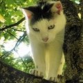 1915895-kittens,trees,cats,animals,feline