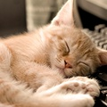 1924970-cats,animals,keyboards,sleeping