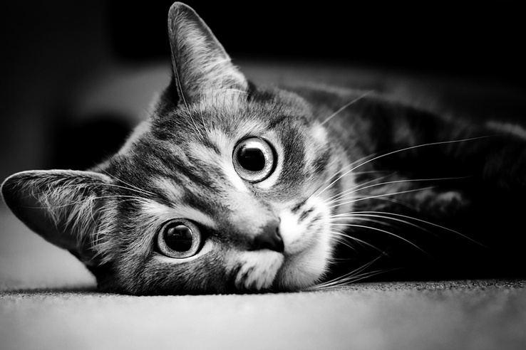 1925157-cats,animals,grayscale,kittens,pets,black white.jpg
