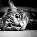 1925157-cats,animals,grayscale,kittens,pets,black white