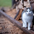 1937443-nature,cats,animals