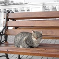 1939021-cats,bench