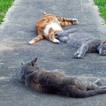 1946642-animals,rest,cats