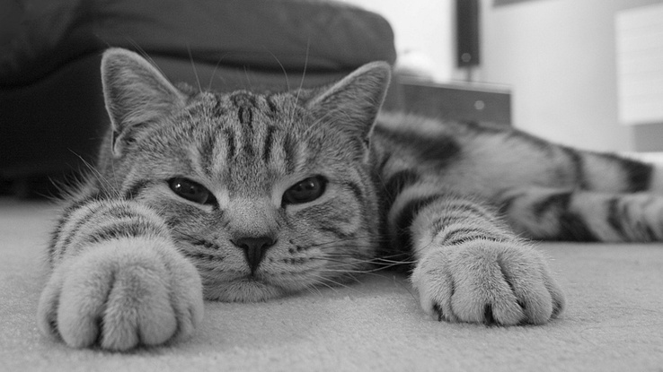 1953084-cats,animals,monochrome.jpg