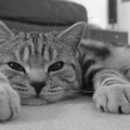 1953084-cats,animals,monochrome