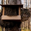 1954842-nature,trees,forest,cats,animals