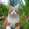 1956501-close-up,cats,animals,brown-white