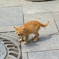 1962104-cats,animals,kittens,pets