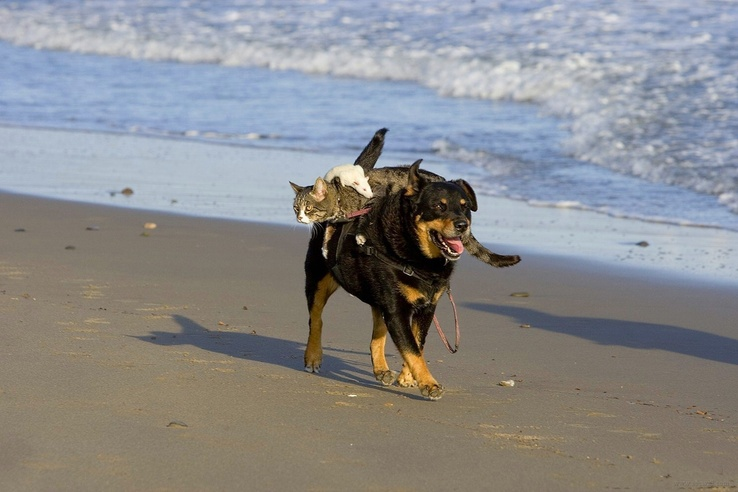 1962105-beach,cats,animals,dogs,pets.jpg