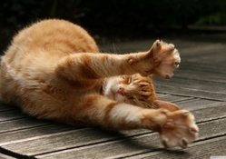2032585-cats,animals,stretching