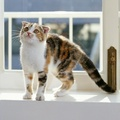 2035300-cats,animals,feline,window panes
