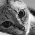 2049605-cats,animals,monochrome