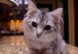 2051415-water,cats,animals,water drops