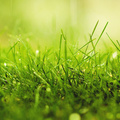 depth of field Art HD Wallpapers. nature Art HD Wallpapers. nature grass macro depth of field...