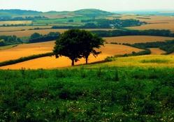 Doğa manzarası