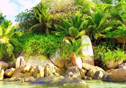 Tropikal Doğa