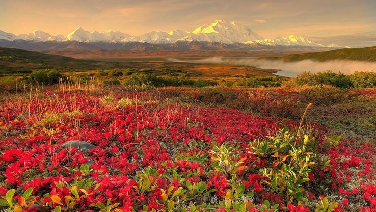 Güzel_çiçekler_ve_Doğa.jpg