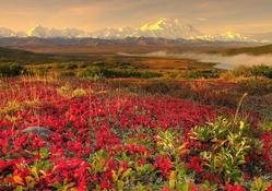 Güzel çiçekler ve Doğa