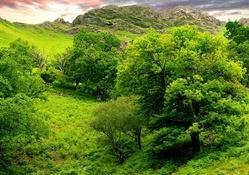 Tepedeki yeşil ağaçlar