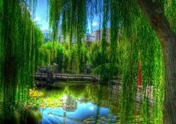 Parktaki Göl
