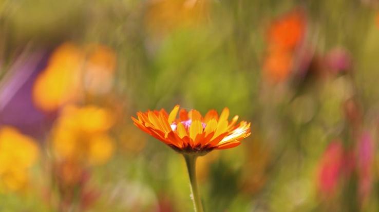 Цветок оранжевый фото 11