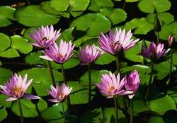 çiçek Resimleri Resim Wallpaper Güzel Resimler Manzara Resimleri