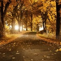 fall-wallpaper-25
