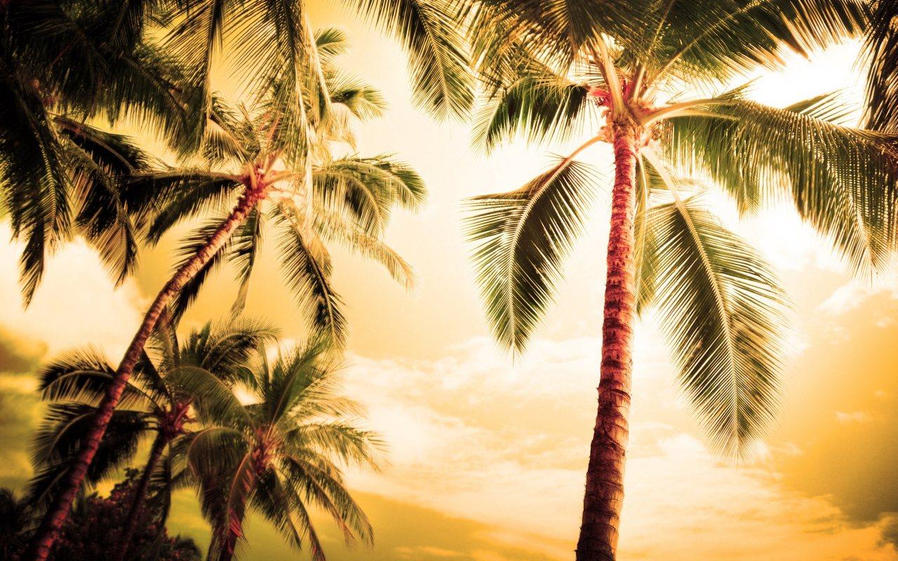 Palmiye ağaçlar ve gökyüzü